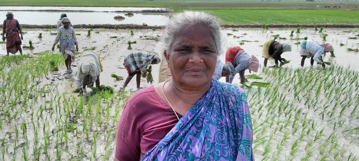 In Tamil Nadu, farmers have lost an entire crop season to