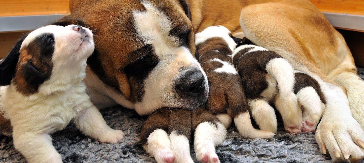Do foreign dogs love Delhi as much as Delhi loves them?