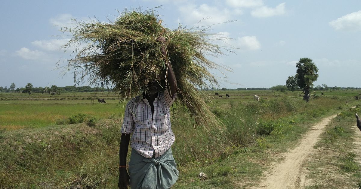 Not everyone gets a monsoon: Tamil Nadu is still reeling from the worst drought in 140 years