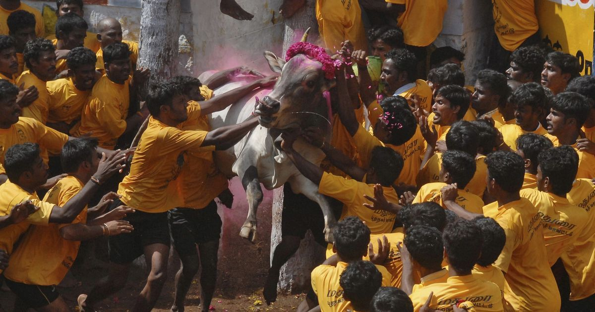 Centre approves Tamil Nadu government's draft ordinance to revoke jallikattu ban