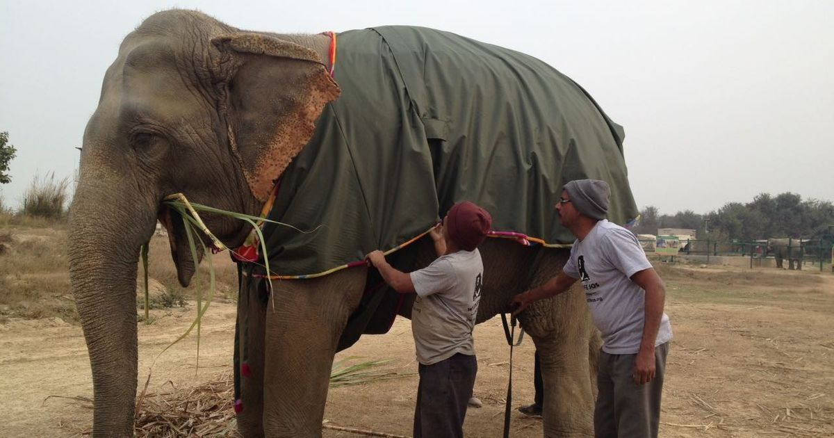 fundraising photo op over mathura elephants wrap up snug in their