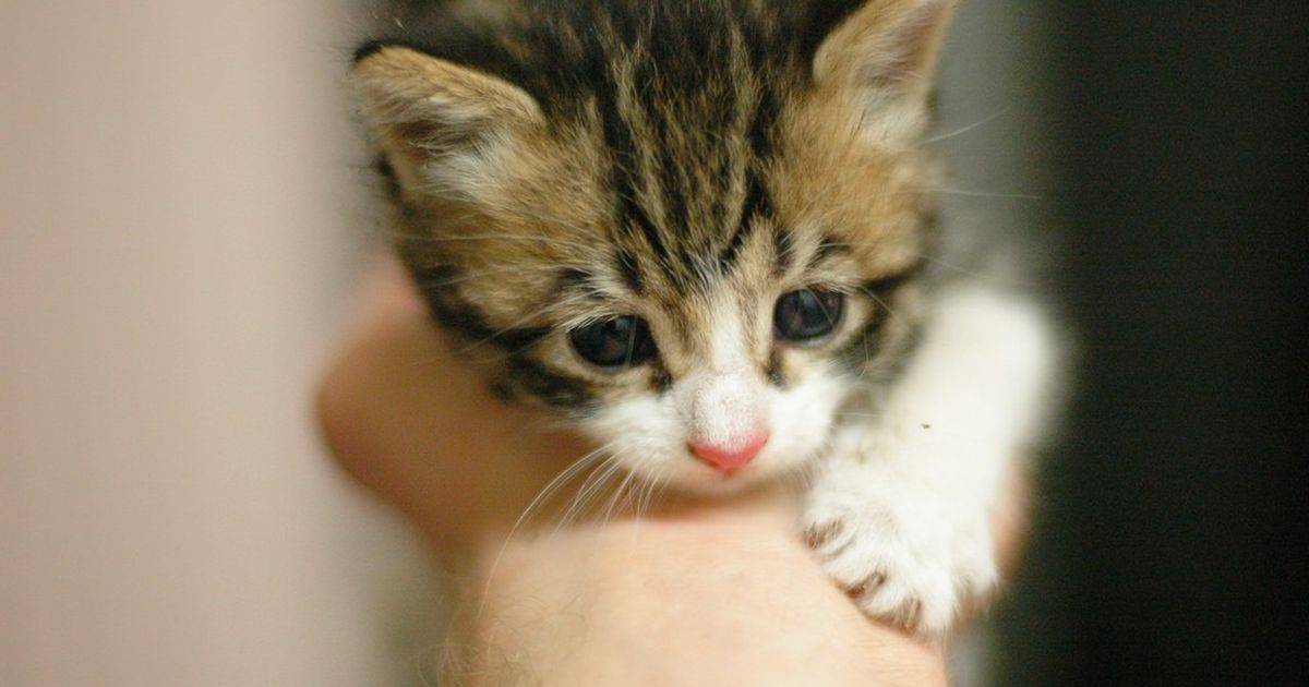 Wait For A Kitten To Die In A Closed Box To Learn About Air Suggests A