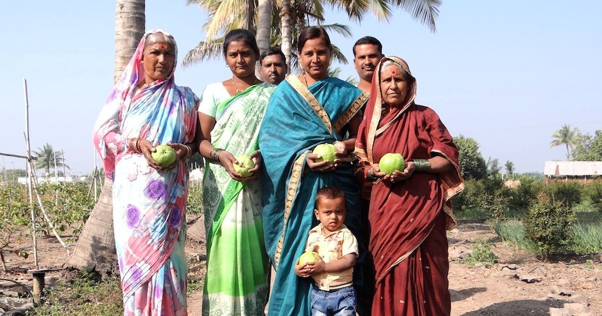 One is enough for the entire family': A new variety of guava