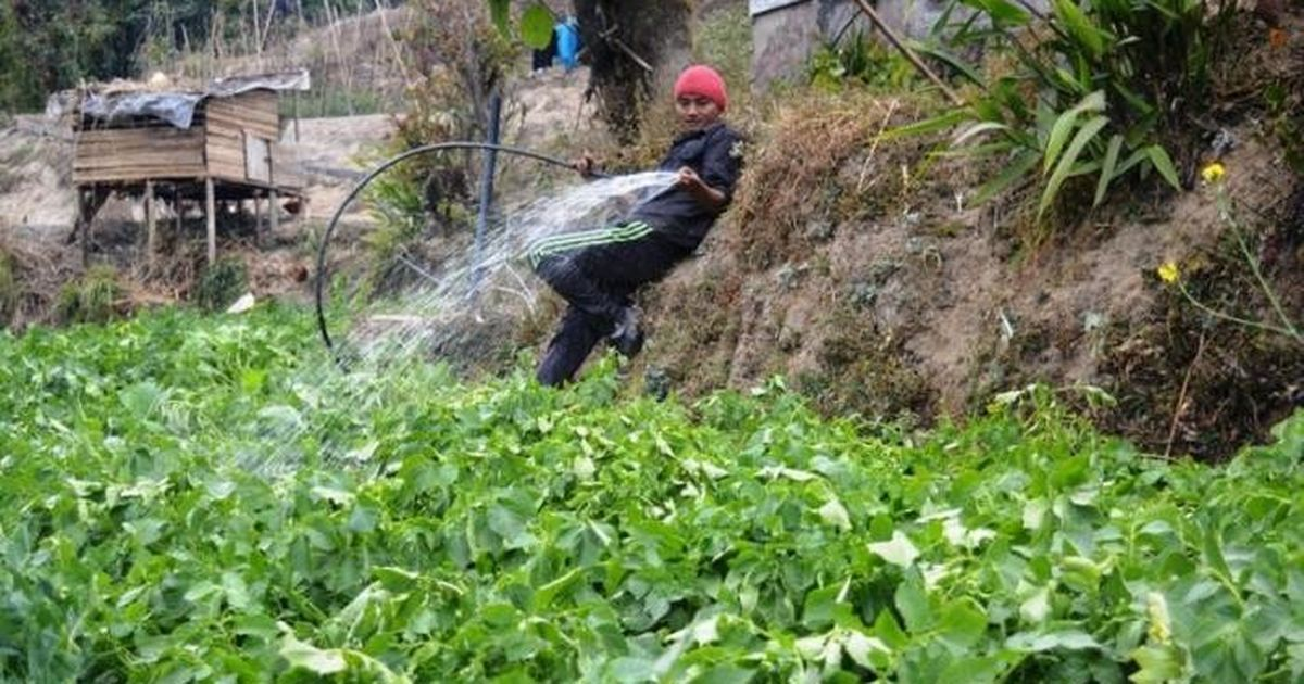In Sikkim, a crop of young entrepreneurs is leading the charge for a shift to organic farming