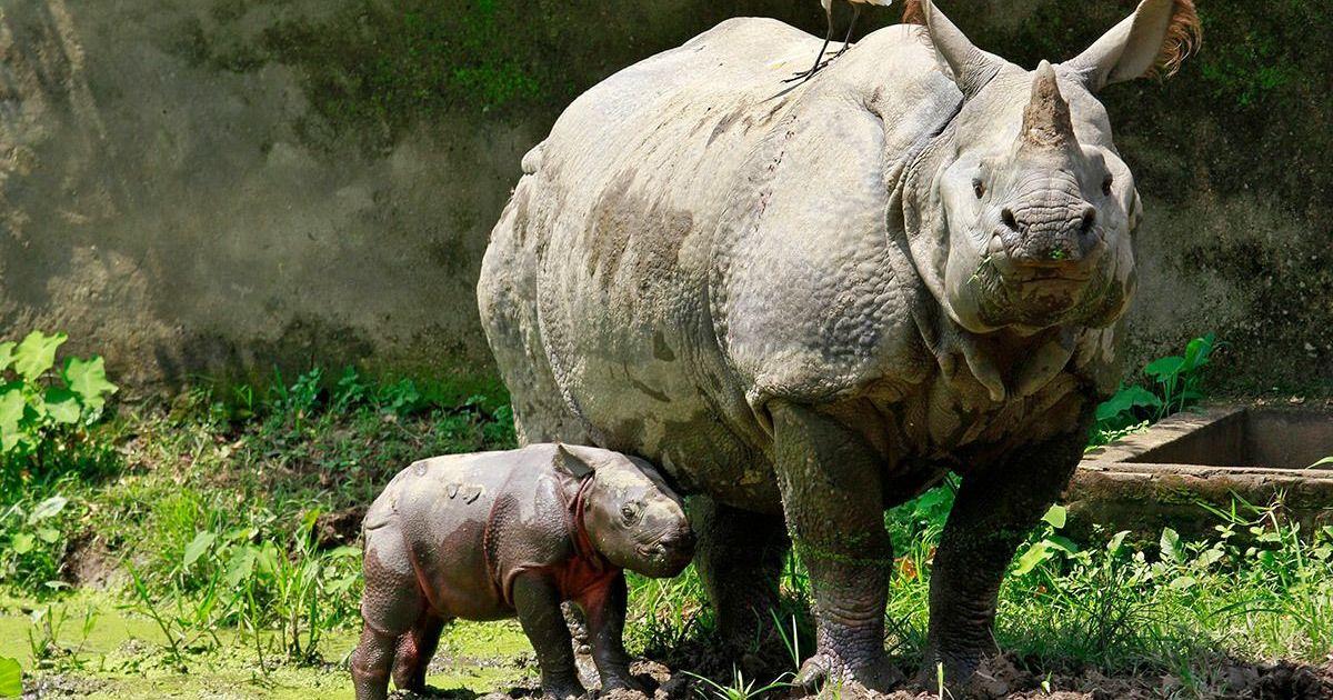 Assam floods have killed 91 animals at Kaziranga National Park so far, Centre tells Parliament