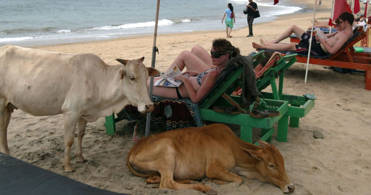 Beef ban dominates political discourse in Goa ahead of impending bye-elections