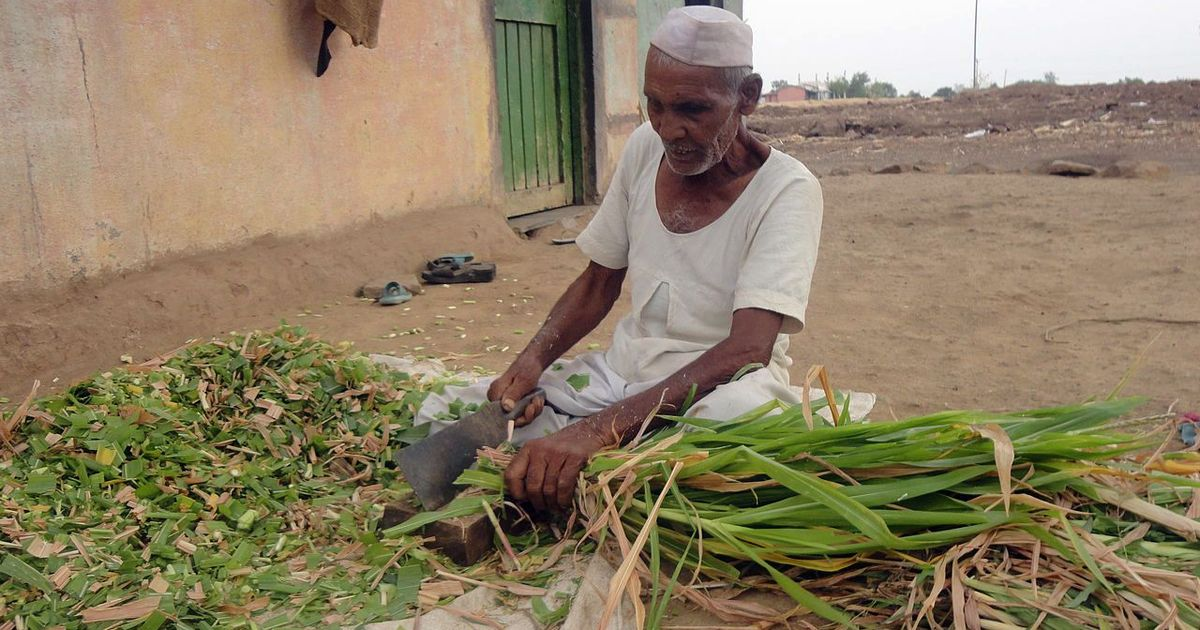 The elderly in India's informal workforce often can't retire, even if they want to