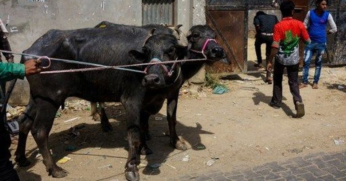 Maharashtra Police to start using meat detection kits from August: Reports