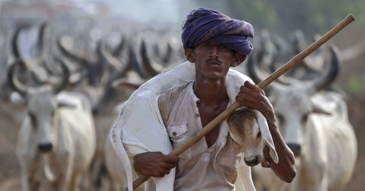 Will slaughter curbs lead to cattle surplus? Indian academicians have been debating this since 1926
