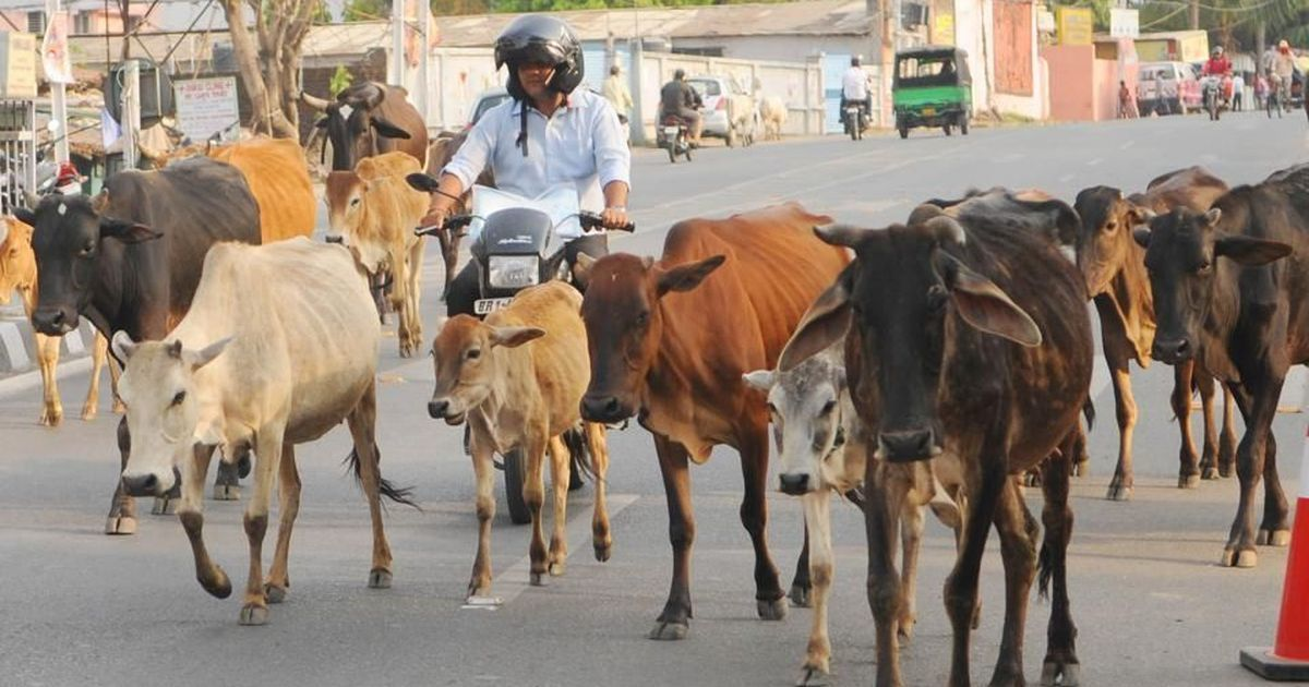 Brand killers as convicts not gau rakshaks, says Rajasthan Home Minister