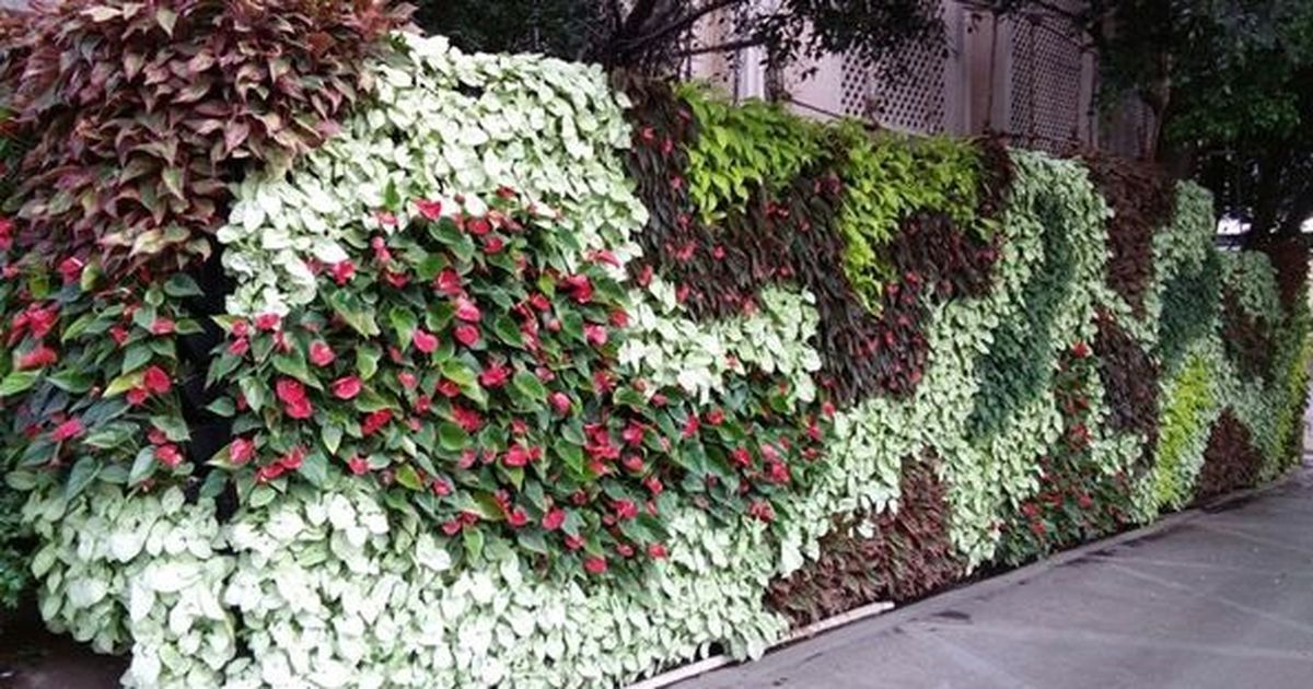 Living green walls india should look to vertical gardens to combat heat pollution