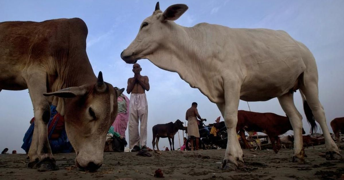 The Daily Fix: Cattle slaughter laws and gau rakshaks are hurting Indian farmers – and the economy