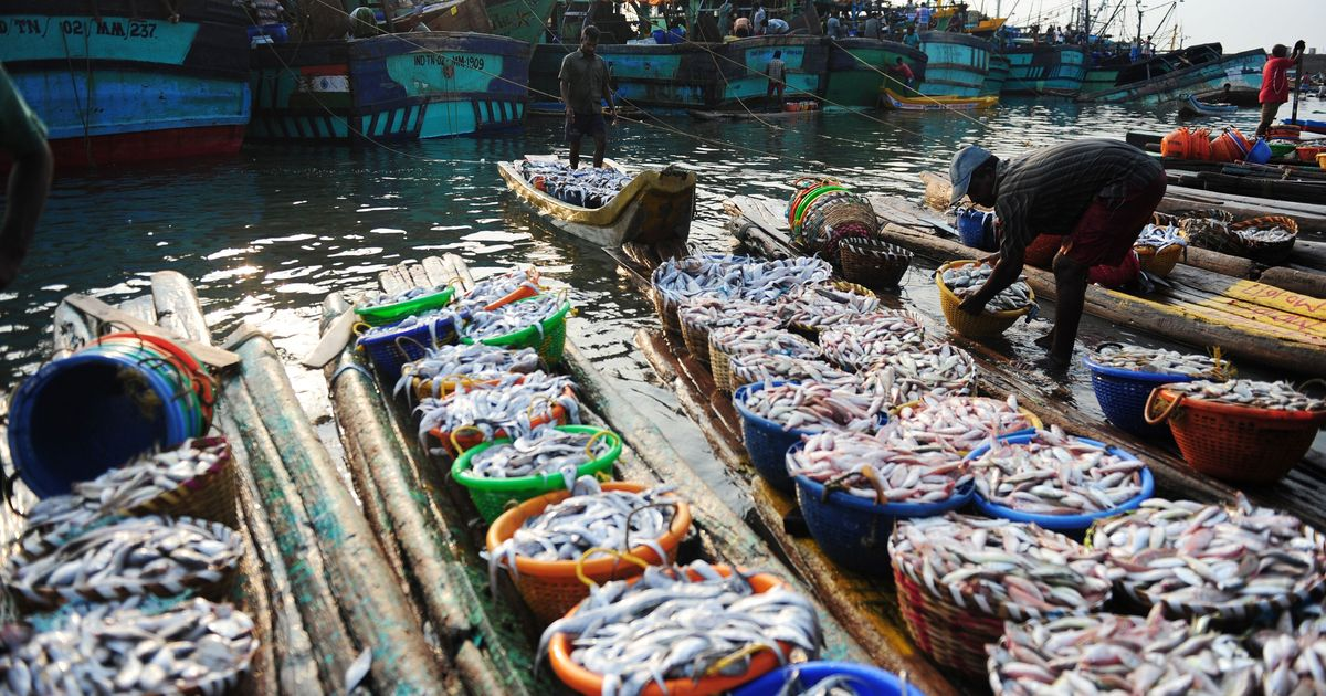 India's seas are gasping for oxygen – causing marine life to shrink