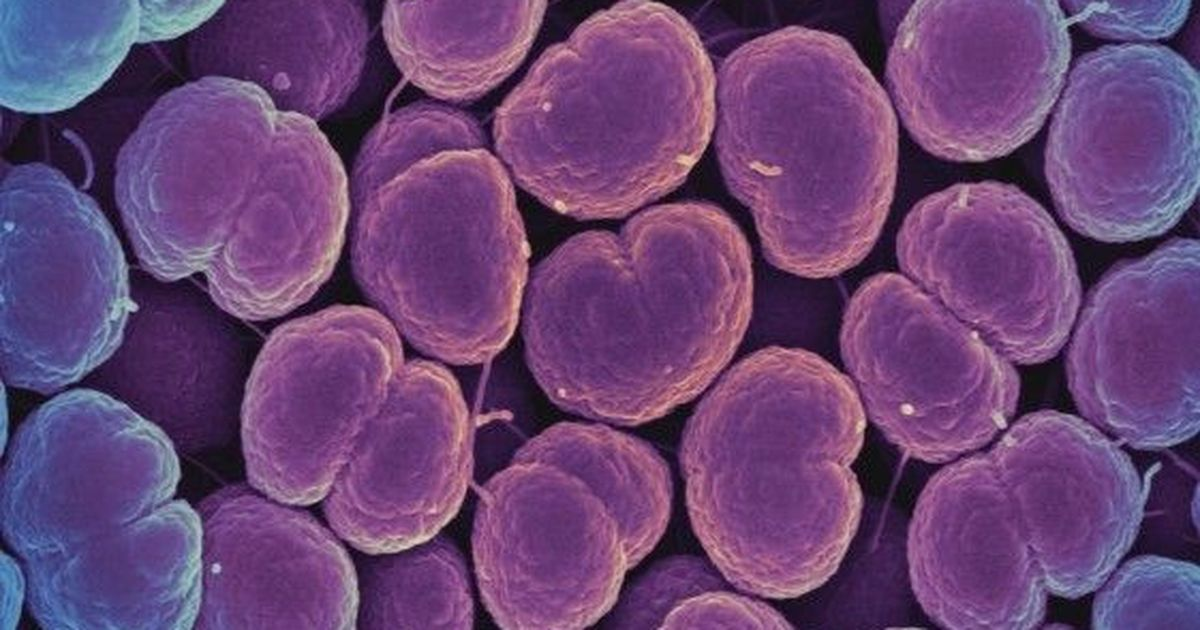 In the news: WHO sounds the alarm on a gonorrhea superbug that is hard to treat and more