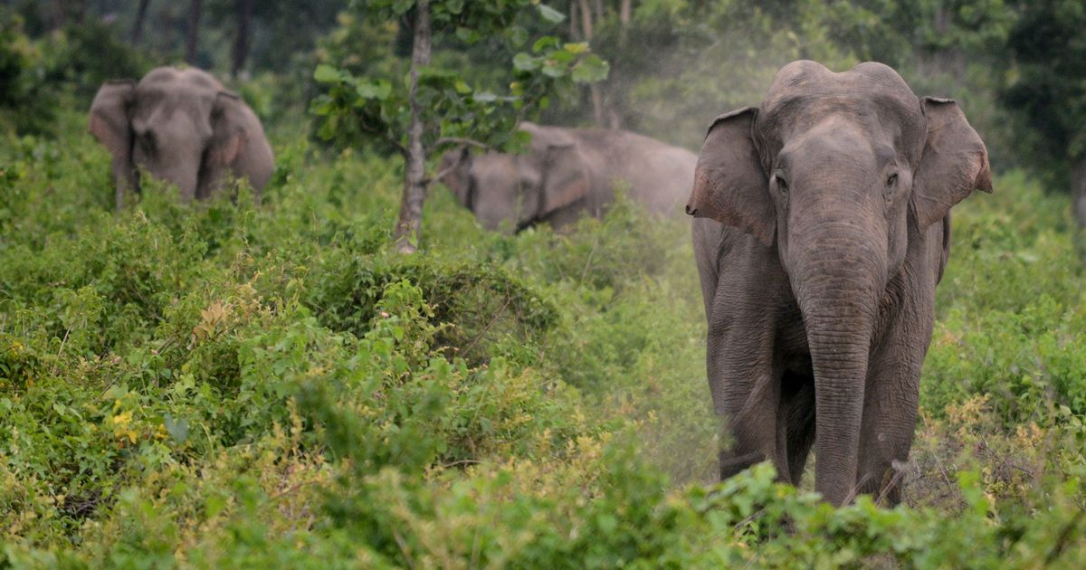 How a Karnataka town used SMS alerts to reduce human-elephant conflicts