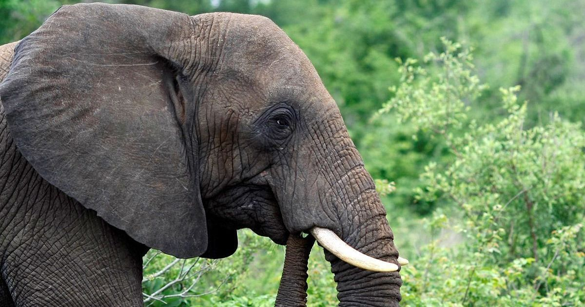 Why are hundreds of elephants dying mysteriously in Botswana?