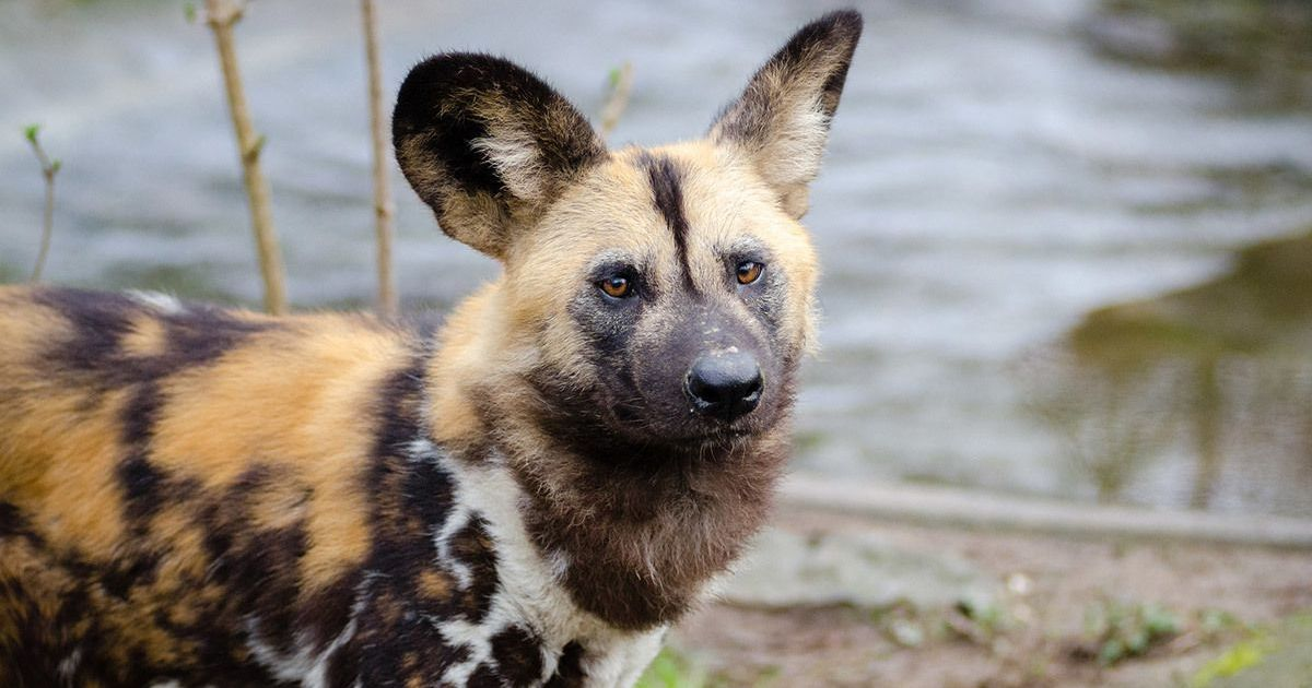 Dogs Adaptations To A New Home