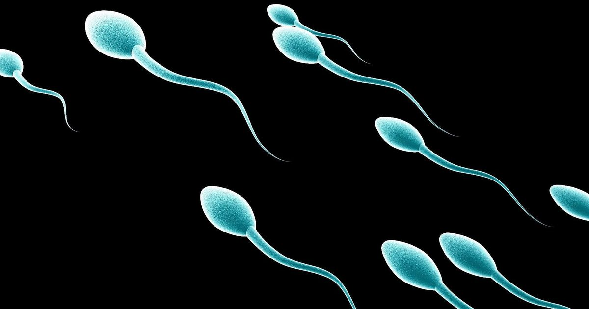 A new study confirms a huge drop in men's sperm levels. Here are all the facts