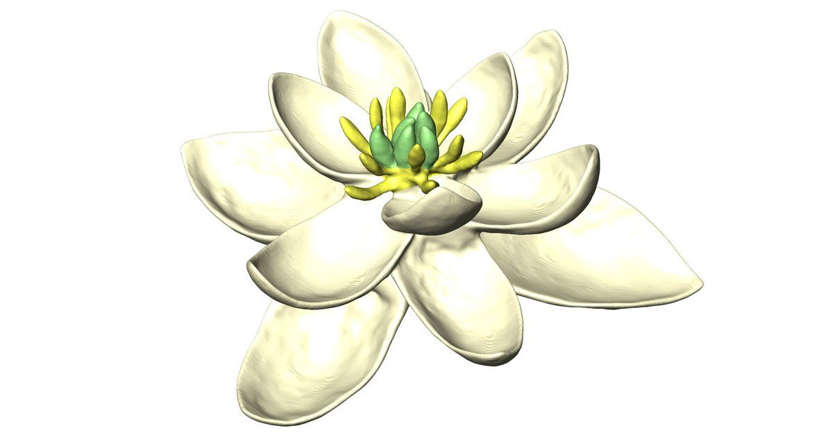 The first ever flower bloomed 140 million years ago and looked like a magnolia
