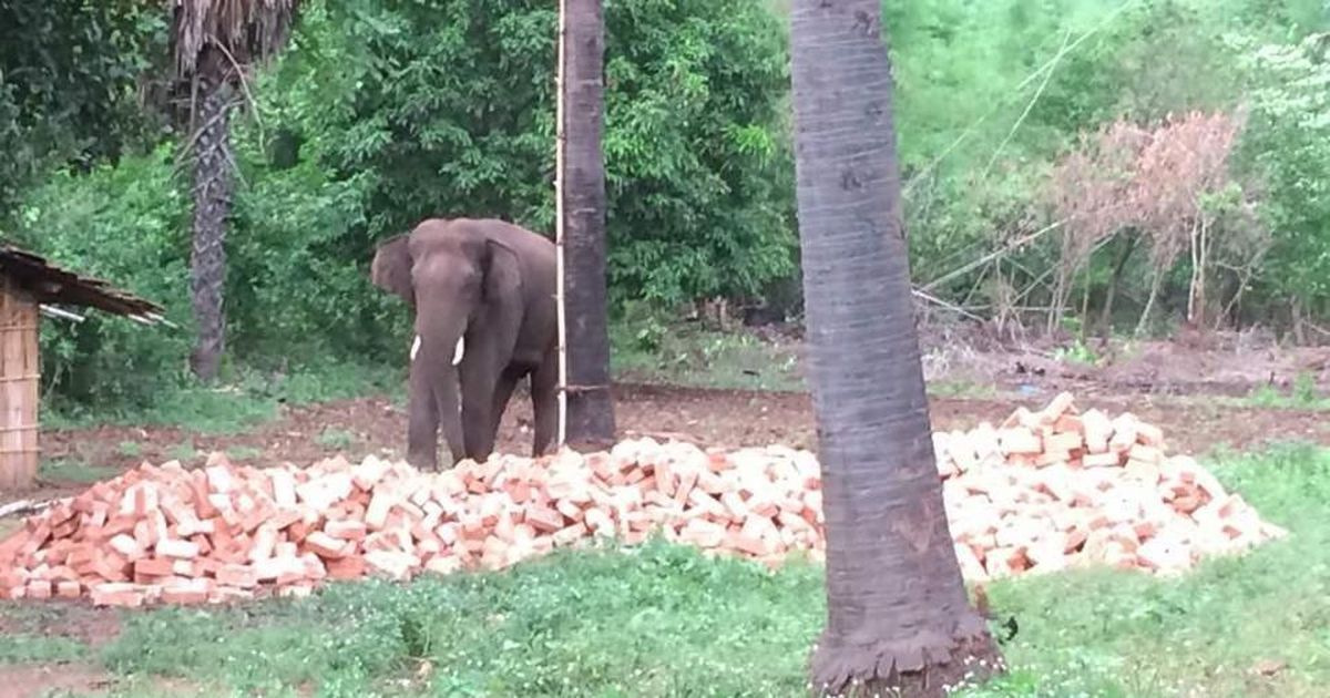 Elephant that killed 15 in Bihar and Jharkhand may be shot dead if not brought under control