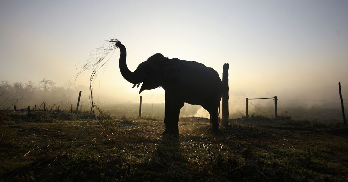 Serial-killer elephant shot dead in India