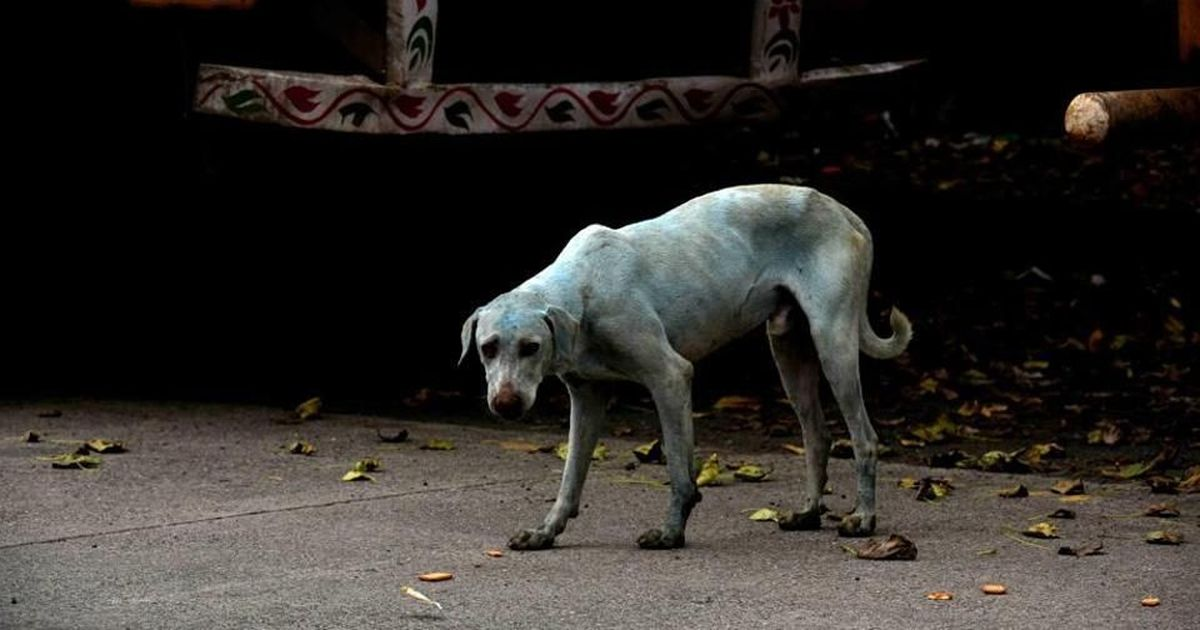 Why dogs in an Indian neighborhood are turning blue