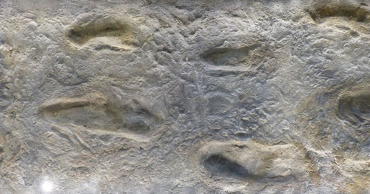 Ancient footprints in Crete challenge theory of human evolution – but what actually made them?