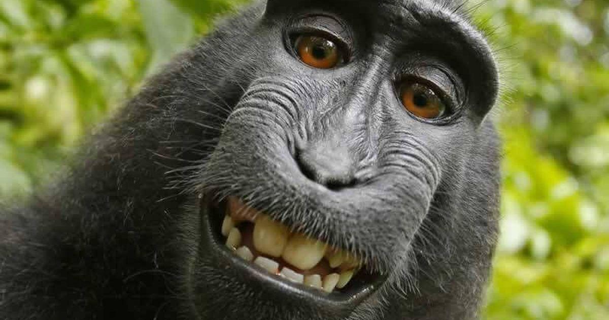 British photographer wins copyright battle over monkey selfie