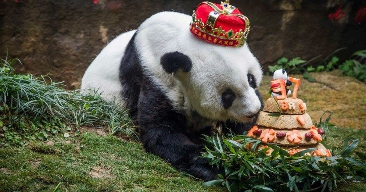 Basi, the world's oldest captive giant panda, dies in China