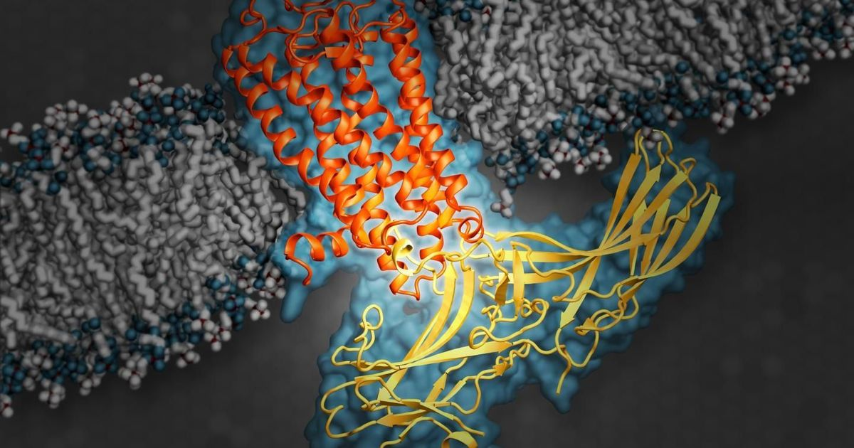 Lab notes: New method to tinker cell surface proteins can help design new drugs