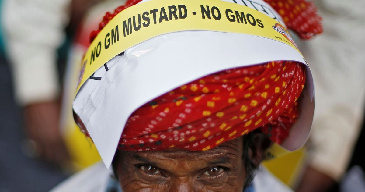 India has imported millions of tonnes of GM food products in violation of food safety laws