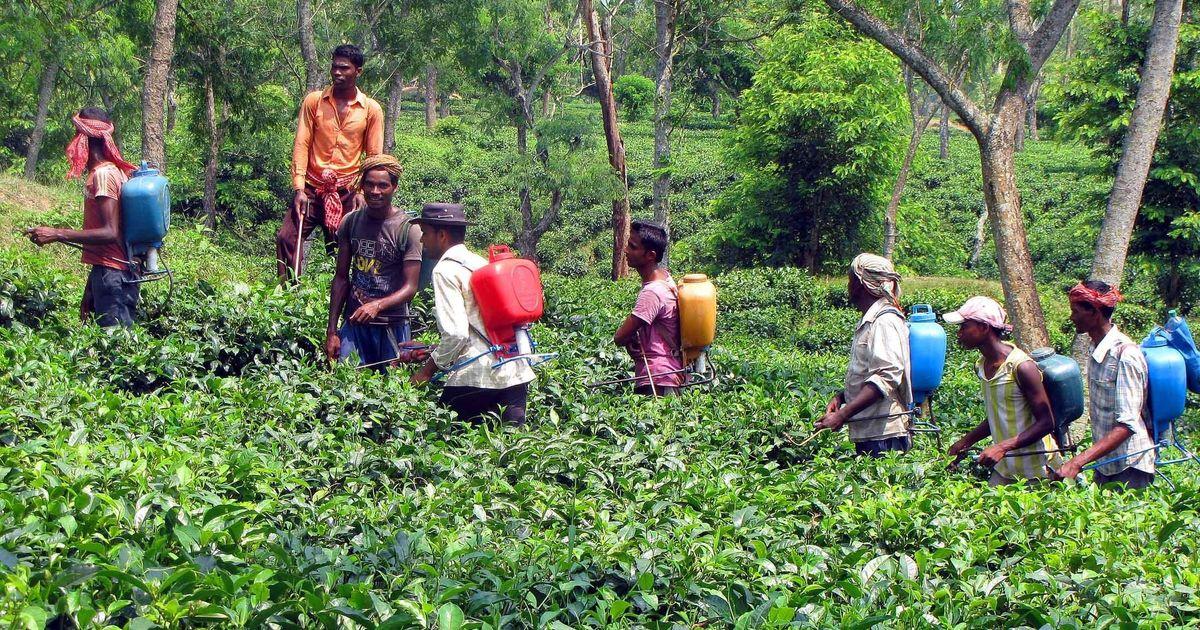 कीटनाशकों के छिड़काव से महाराष्ट्र में दर्जनों किसानों की मौत पर देश के अखबार क्या सोचते हैं?