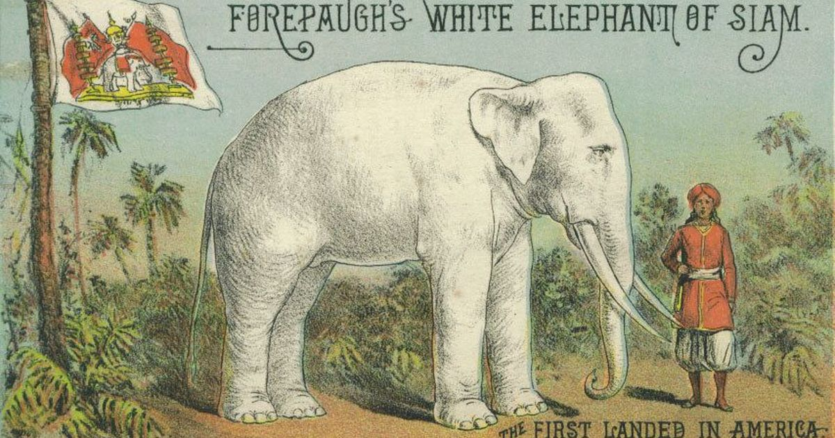 How the arrival of a white elephant started a debate around race in 19th century America
