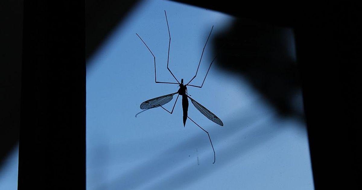 पहले से ही डेंगू से परेशान भारत में इस बीमारी के एक नए वायरस की पुष्टि हुई