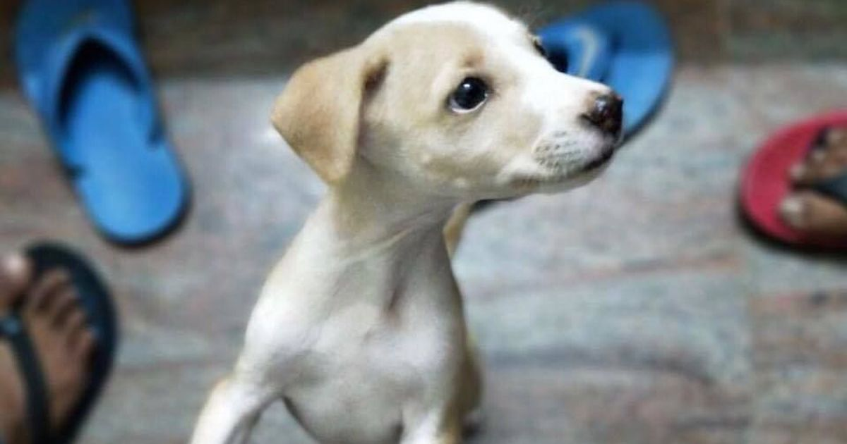 'It's just a dog, I didn't kill a human': Student booked for throwing a puppy off terrace in Vellore