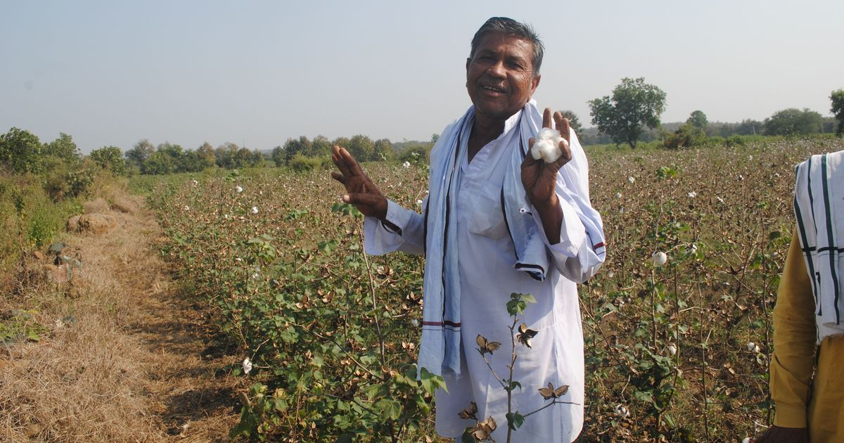 A litany of miseries: After crop failure and debt, pesticides are killing farmers in Vidarbha