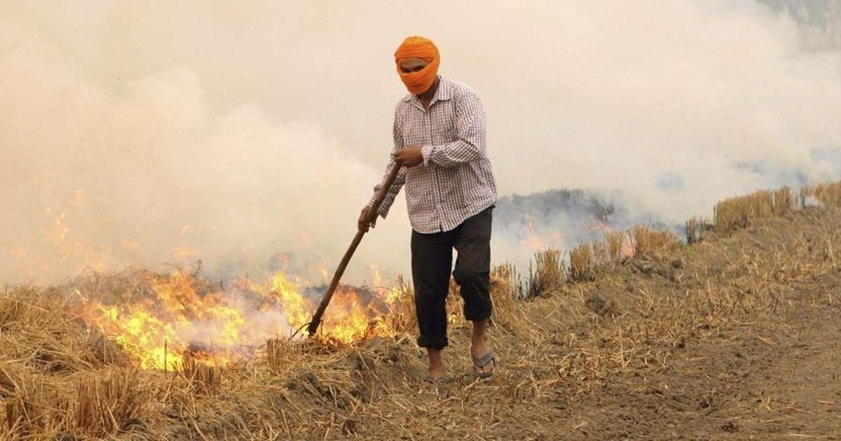 Basmati blues: As paddy stubble burning begins in the North, Delhi prepares for a polluted winter