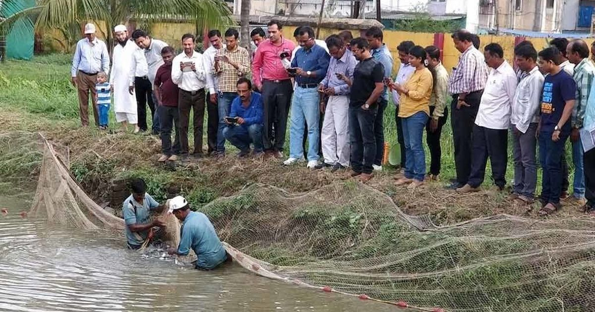 How rearing fish in small ponds is helping farmers boost