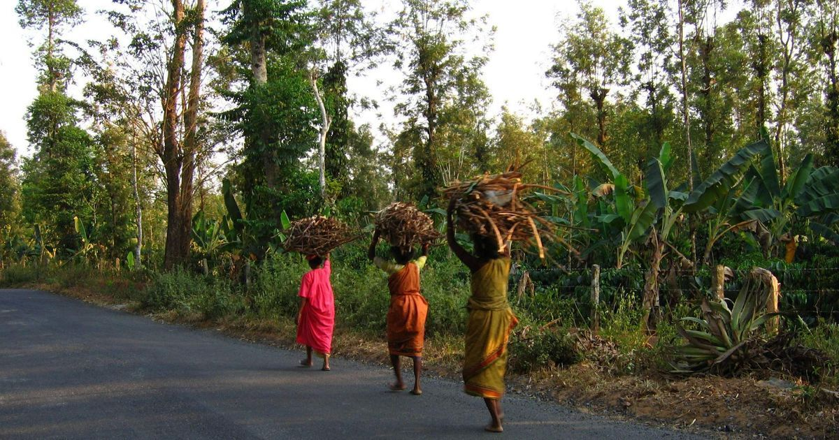 Centre seeks to change forest policy to promote industrial plantations in natural forests