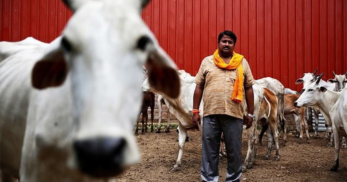 'Cow vigilantism has led to a major collapse in animal markets and hurt farm incomes': Cattle expert