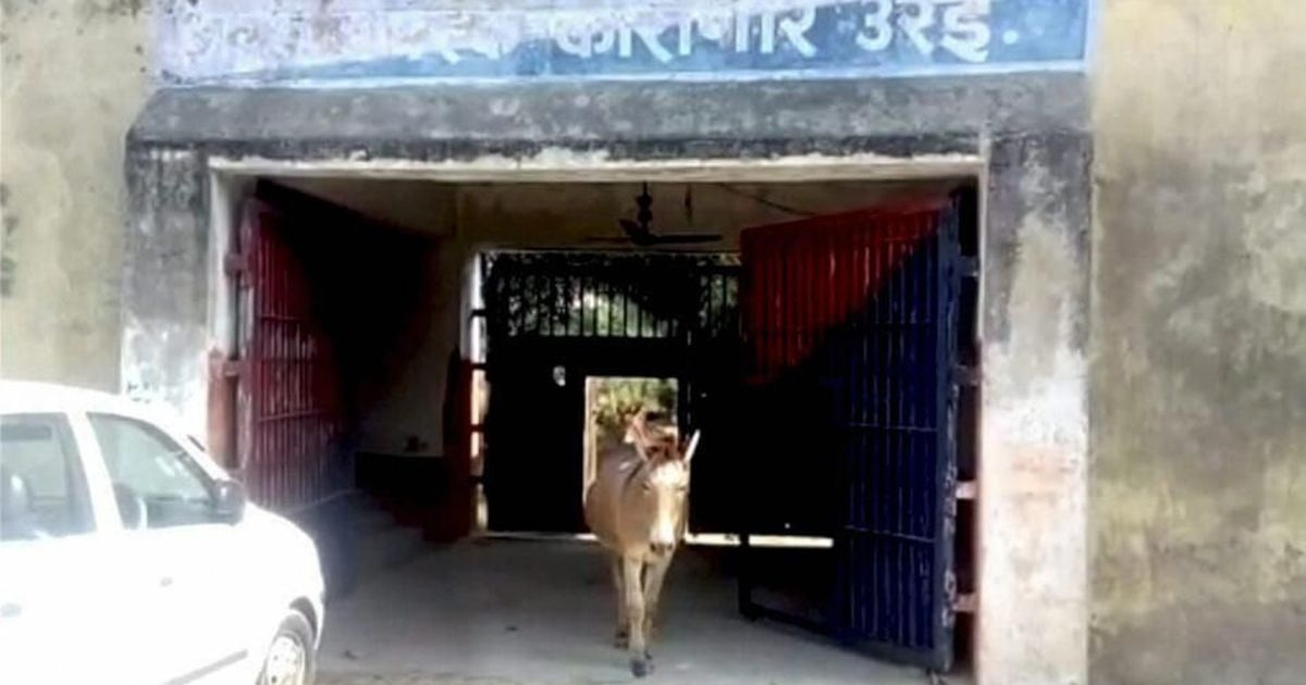 Uttar Pradesh: Orai Jail guards 'arrests' donkeys for grazing exotic plants