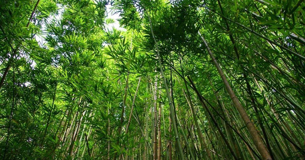 देश में वन क्षेत्र बढ़ने की इस खबर में एक चिंता भी छिपी है
