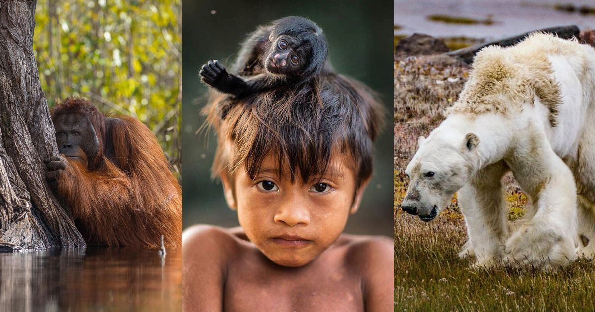 National Geographic's most-liked Instagram pictures of 2017 are both beautiful and heartbreaking