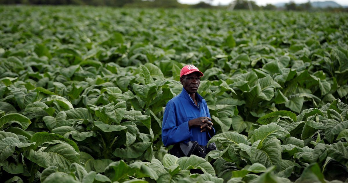 The tobacco industry is wooing farmers in Africa with false promises of prosperity