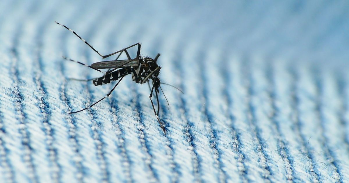 Commonwealth Games athlete in 'serious condition' after contracting malaria