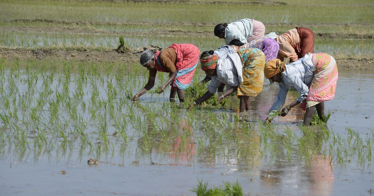 If India really wants to help farmers, it must protect them from climate change. Here's how