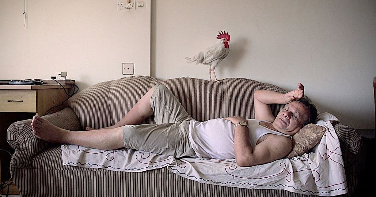 In short film 'Tungrus', a family gets into a flap over its eccentric pet rooster
