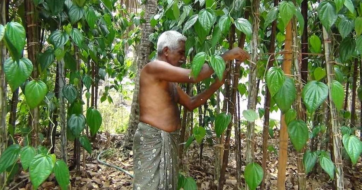 Why thousands of farmers in a Kerala village are praying for peace between India and Pakistan