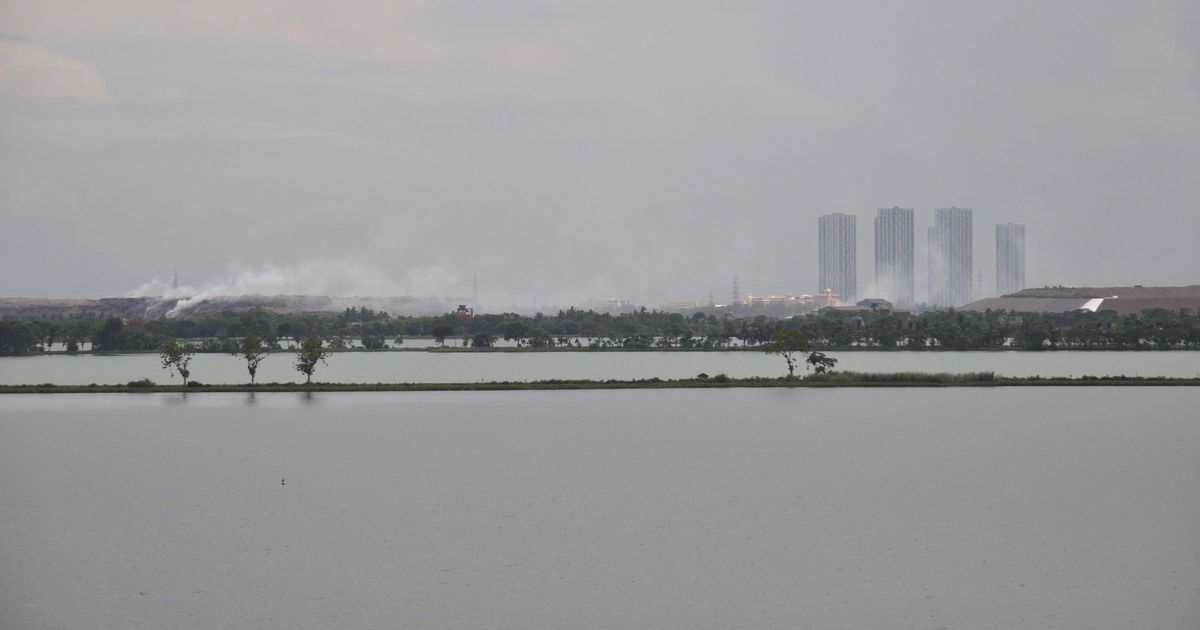 A new study on East Kolkata Wetlands' carbon-absorption abilities is a wake-up call for conservation