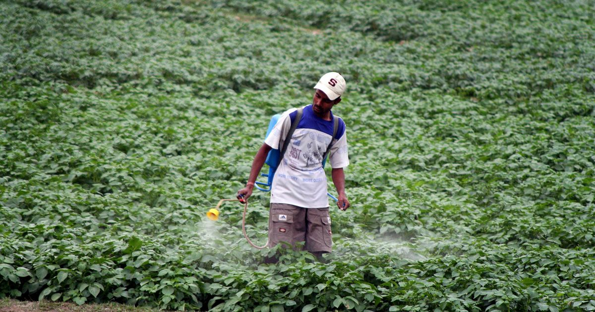 Lethal dose: Indian farmers are dying because the government is regulating pesticides poorly
